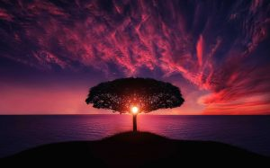 alternative energy solutions - image shows the Sun shining through a tree at night on the beach